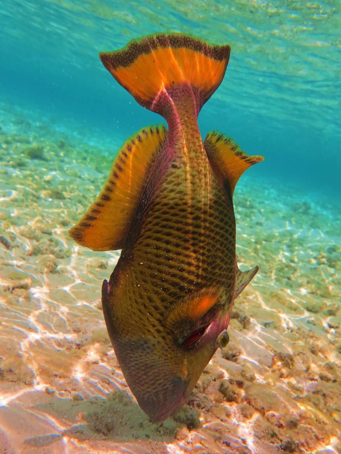 Taucherparadies Malediven