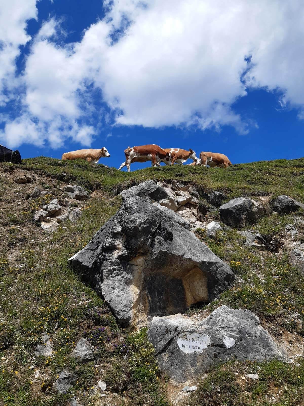Kühe auf der Alm