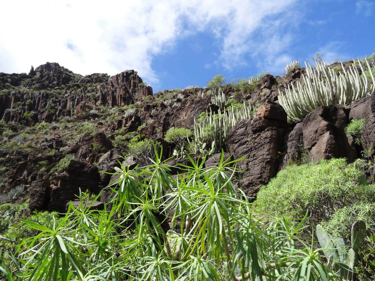 Naturvielfalt auf La Gomera
