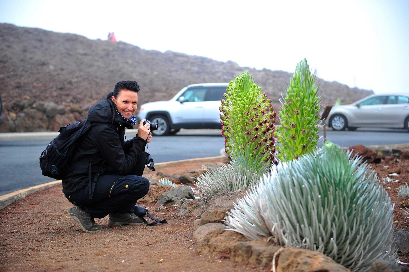 Das Silberschwert auf dem Haleakala (Vulkan) blüht aller 50 Jahre ein einziges Mal - was für ein Glück!