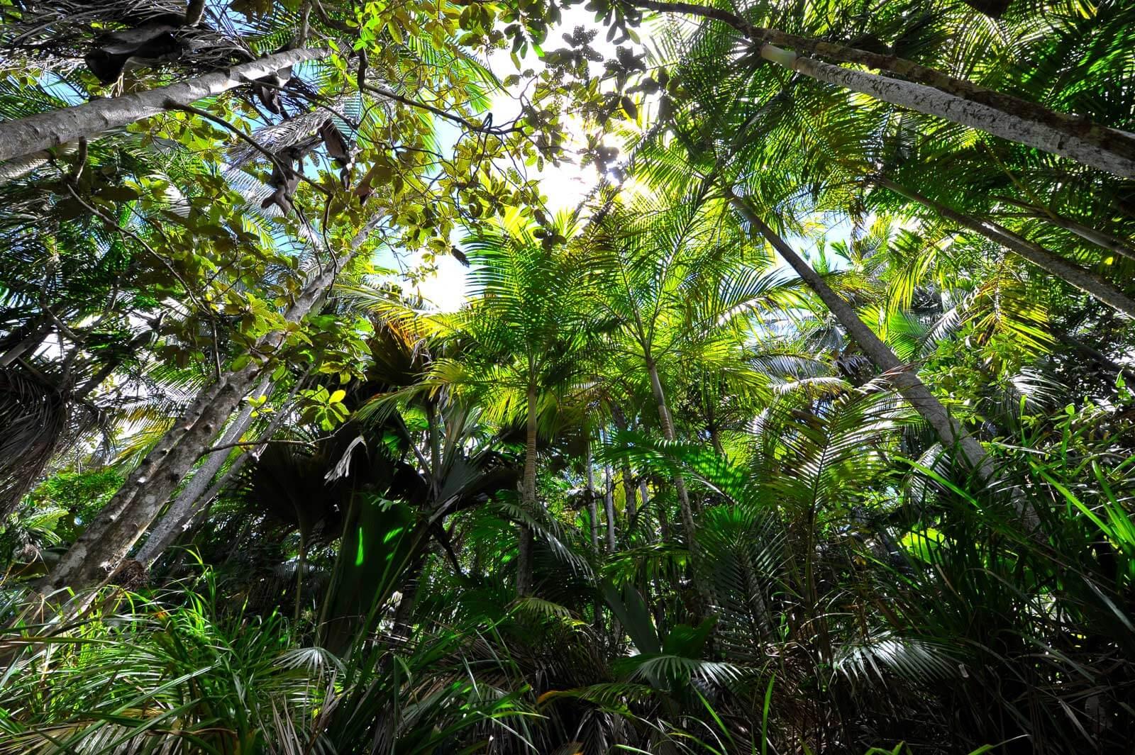 Dschungelfeeling im Vallee de Mai