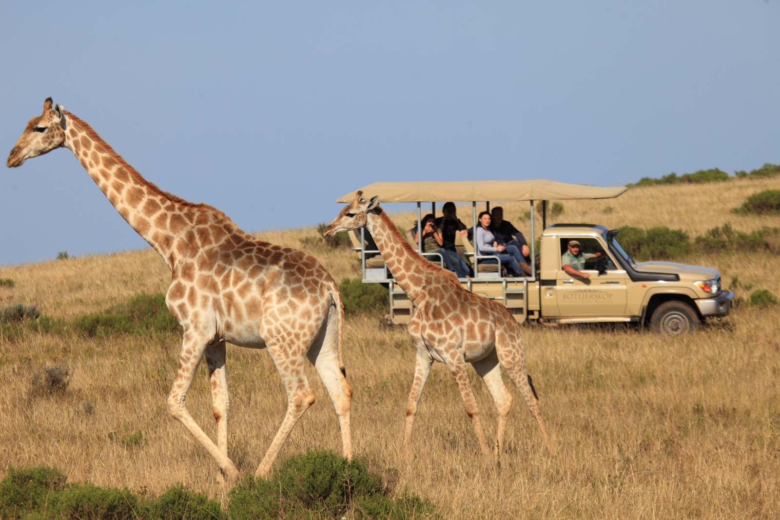 Foto: © Botlierskop geführte Safari