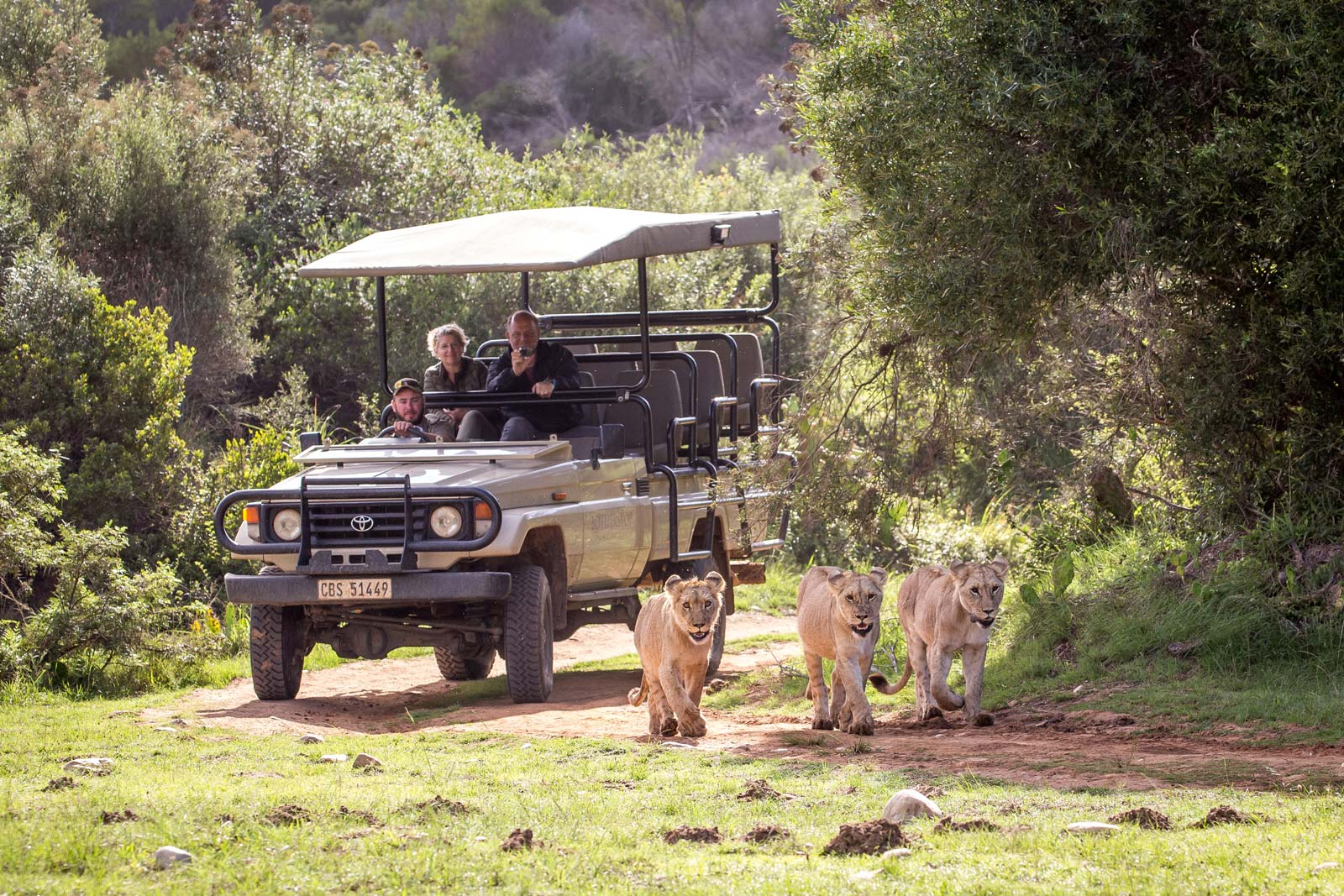 Foto: © Botlierskop Safari Löwen